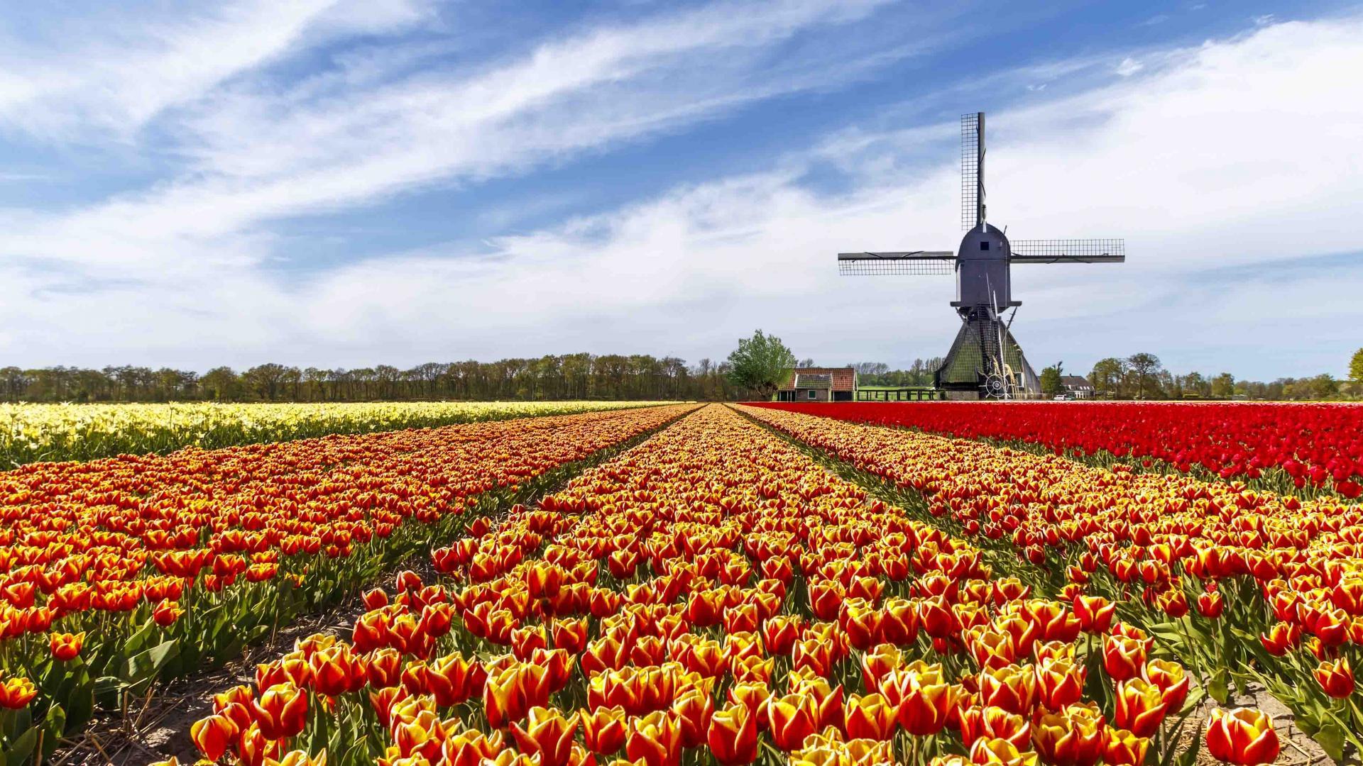 Nizozemsko+Keukenhof